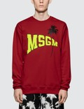 MSGM Logo with Palm Tree Print Sweatshirt Picutre
