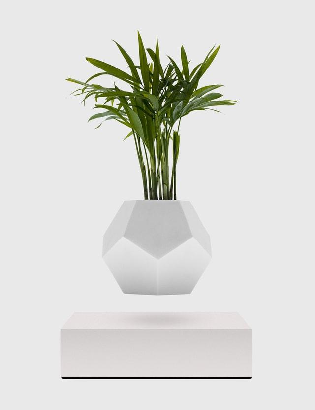 Flyte Lyfe Planter – White White Life