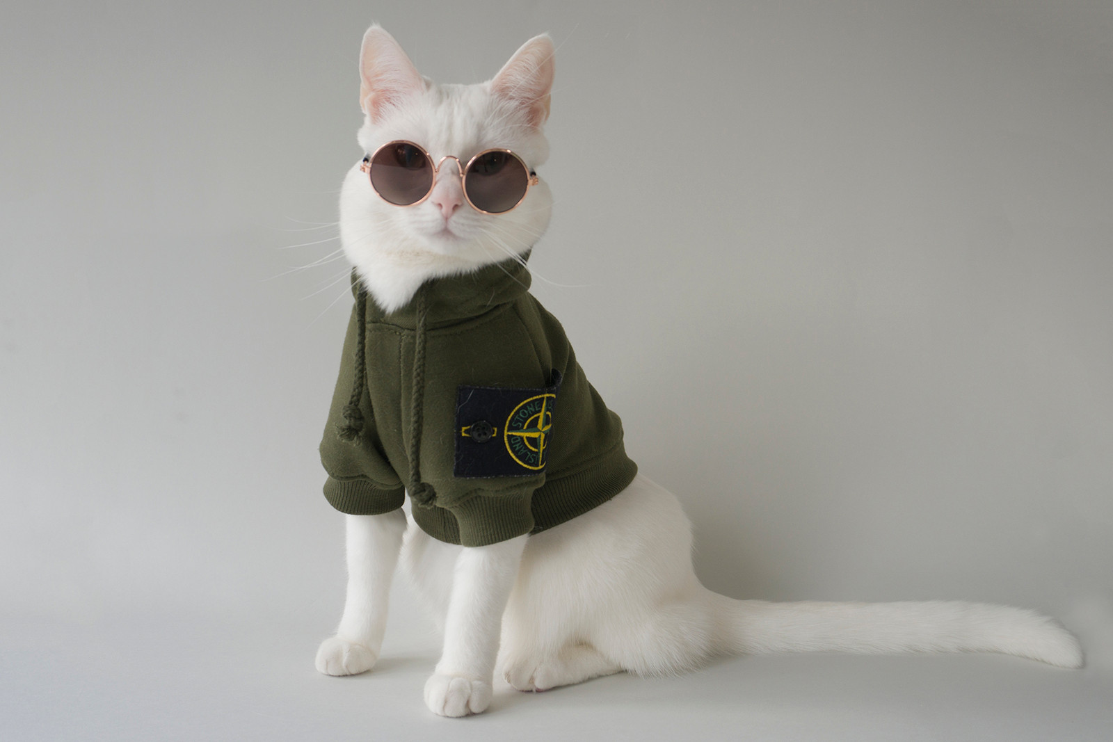 Zappa the Cat Instagram Hyped Hypebae Hypebeast Pet Supreme Stussy Off White Virgil Abloh Vetements Raincoat Hoodie Carhartt Stone Island Vans Video Interview Rotterdam
