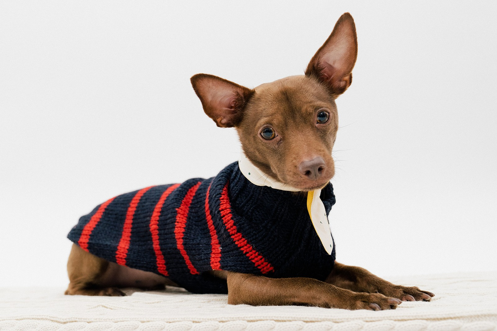 Best Dog Clothing Accessory Brands Muttropolis Studded Collar