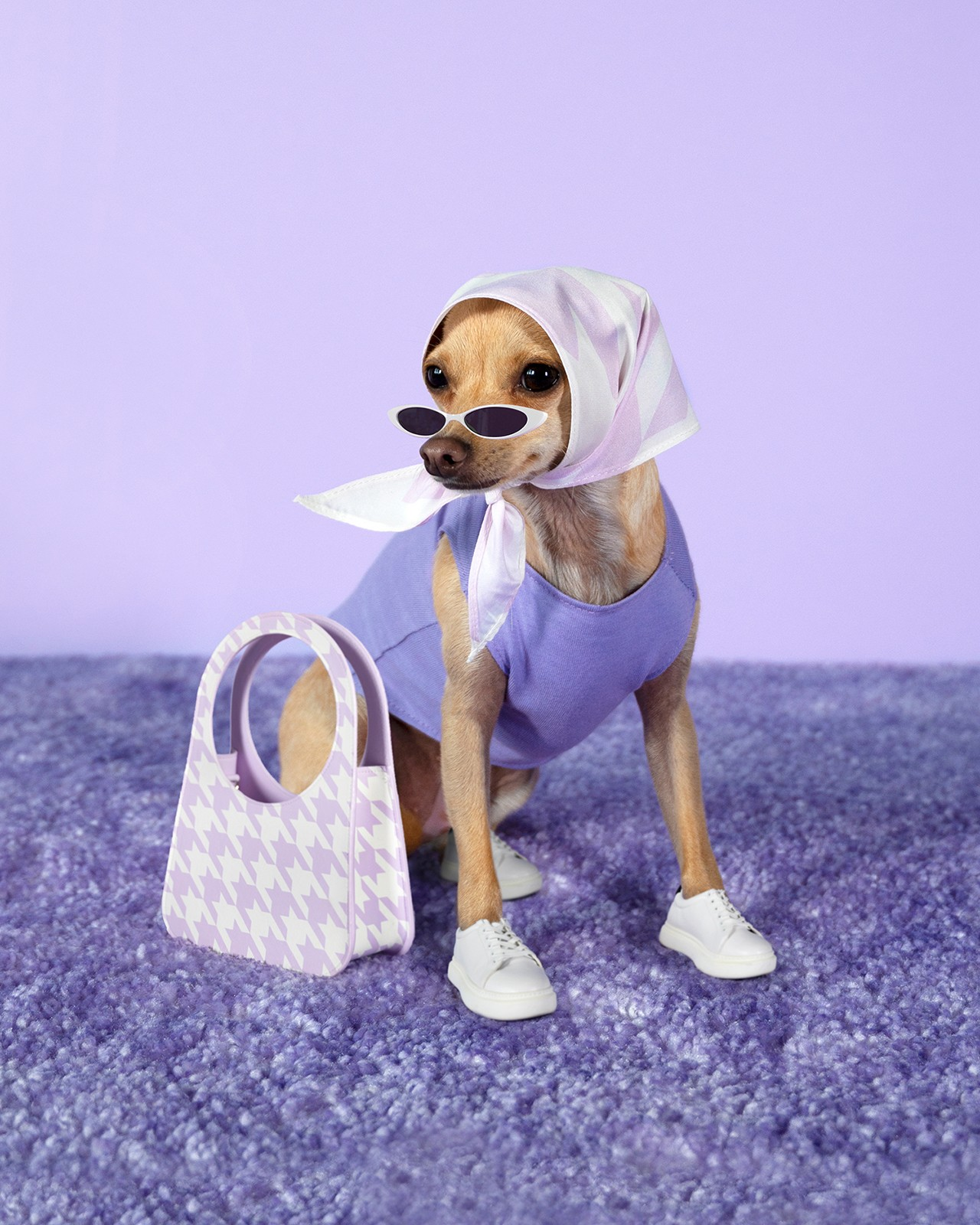 Boobie Billie Instagram Dog Fashion Influencer Style Chihuahua Sneakers Sunglasses Headscarf Cow Print Bag