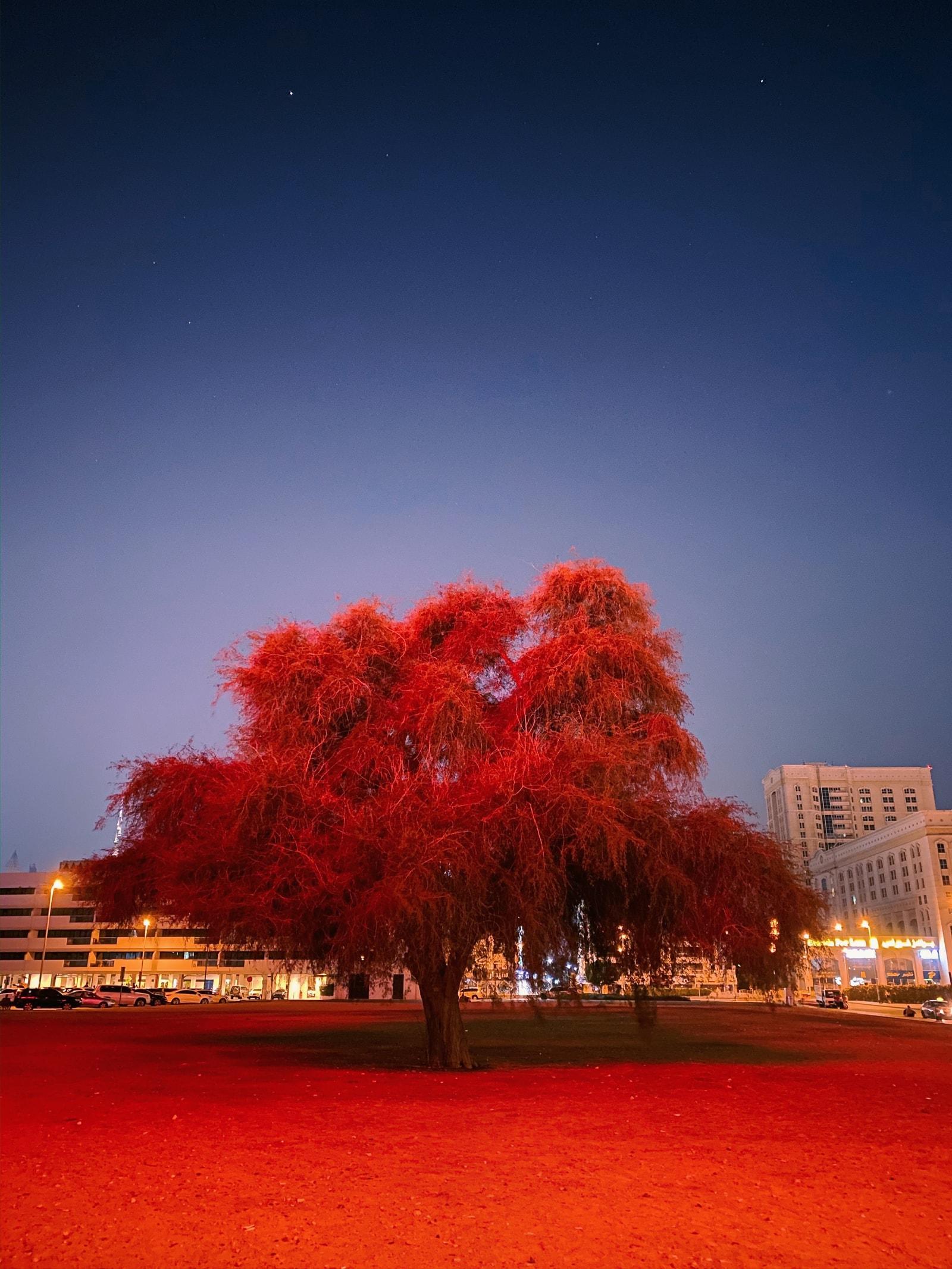 iPhone「夜間模式」攝影大賽中國得獎者 Eric Zhang 與我們分享作品背後的故事及攝影小技巧
