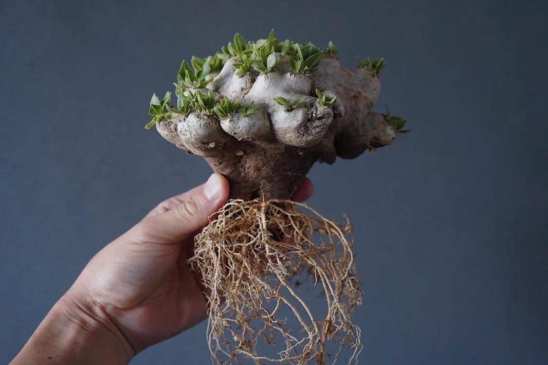 從塊根、竹芋到龜背竹,潮流人士與植物專家的居家植物推薦及養護指南