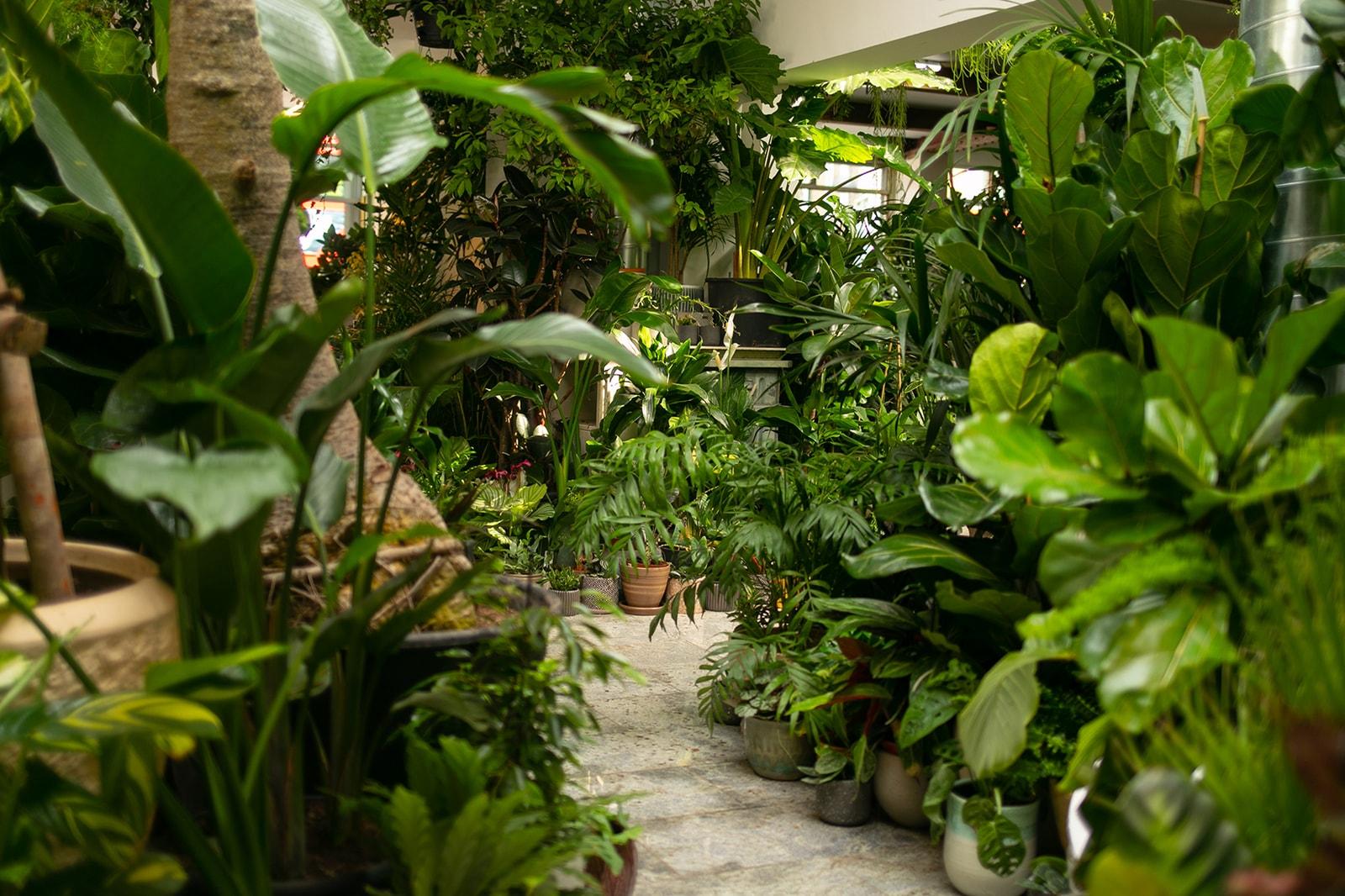 从块根、竹芋到龟背竹,潮流人士与植物专家的居家植物推荐及养护指南