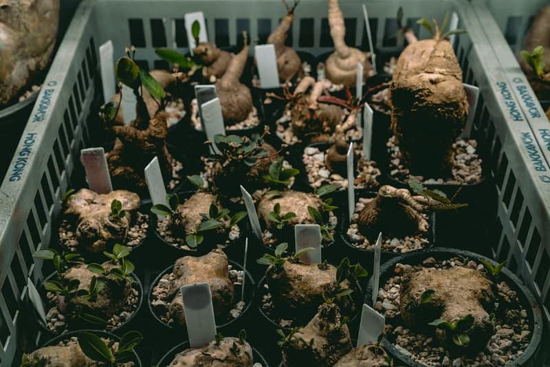 塊根植物入門!建構蝸居中之人氣塊根植物大觀園