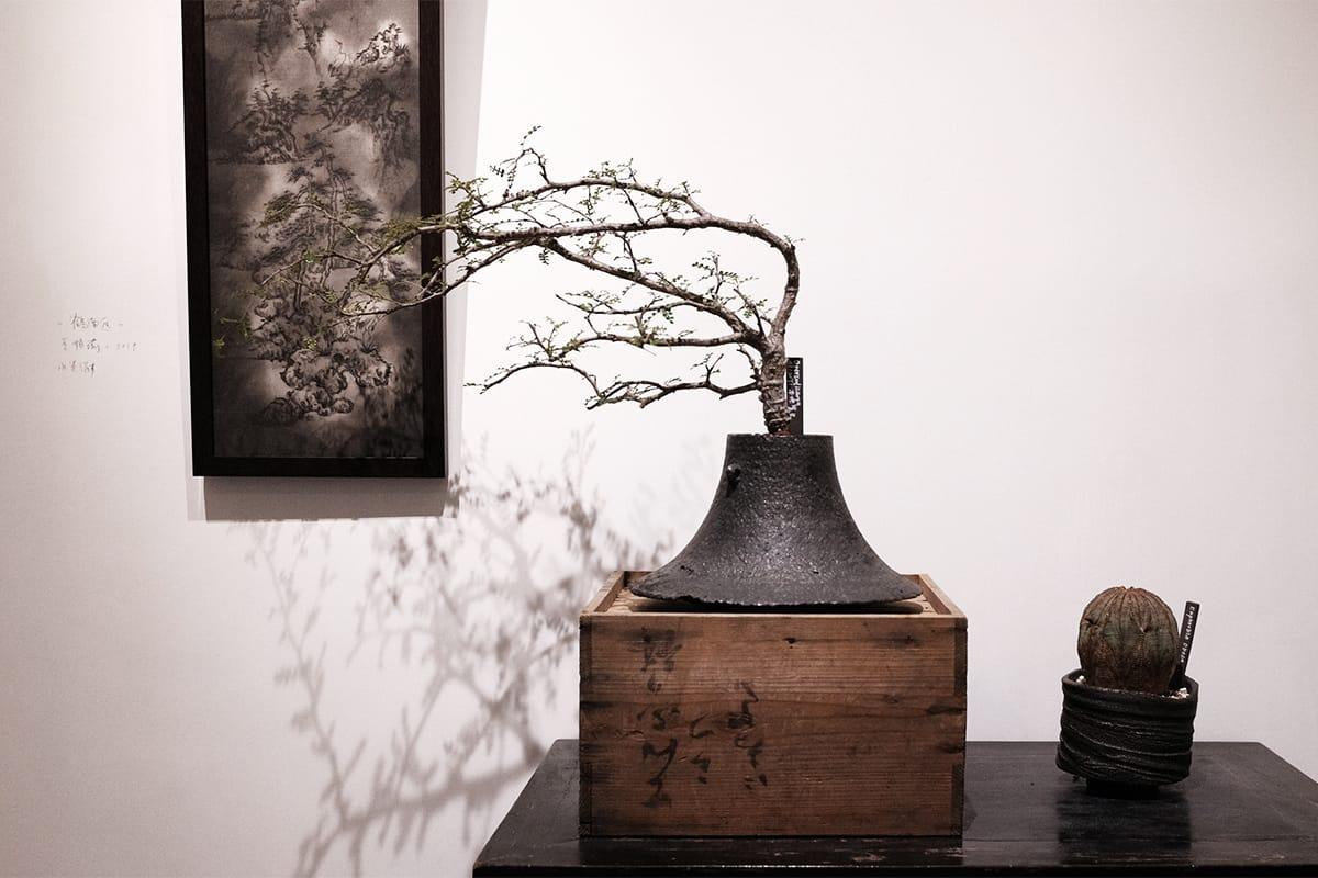 TOKI NASHIKI 举办「石居陋室 Living Stone」多肉植物盆器特展