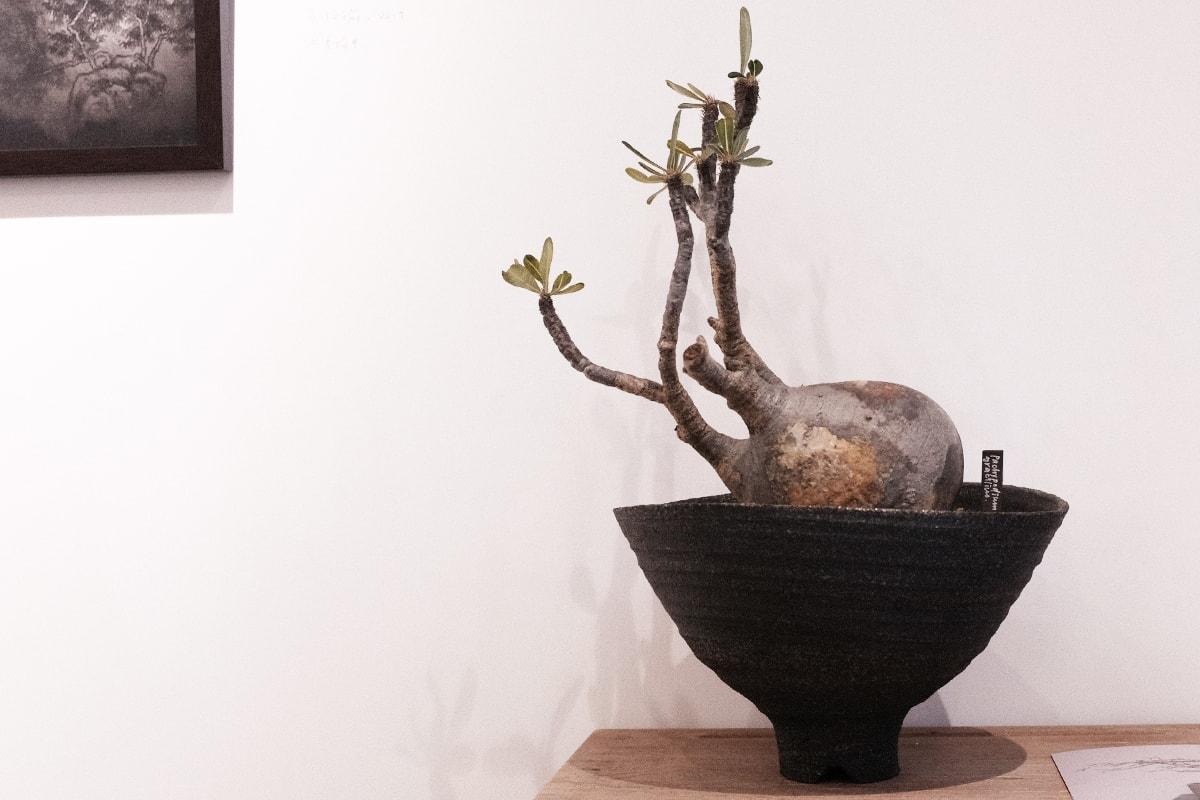 TOKI NASHIKI 舉辦「石居陋室 Living Stone」多肉植物盆器特展