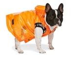 SSENSE 攜手 Burberry、Heron Preston 和 Versace 等品牌打造寵物配件系列
