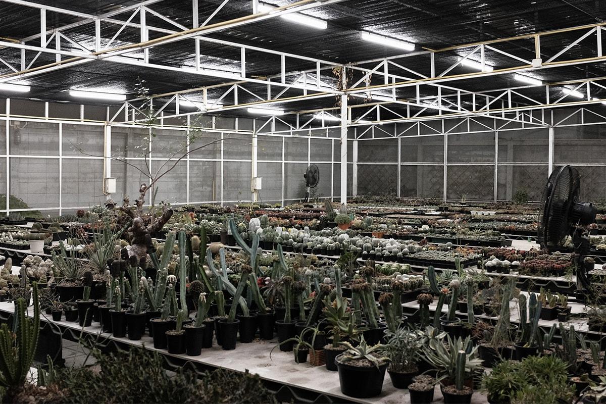 「The Anatomy of Exotic Plants」HYPEBEAST 東南亞塊根培養所