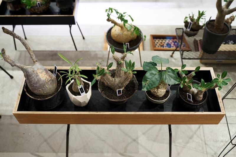時尚名所 JOYCE x Plants of Gods 舉辦期間限定展覽