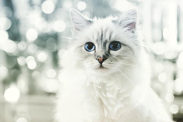 Karl Lagerfeld's Cat Made $4.25 Million USD Last Year