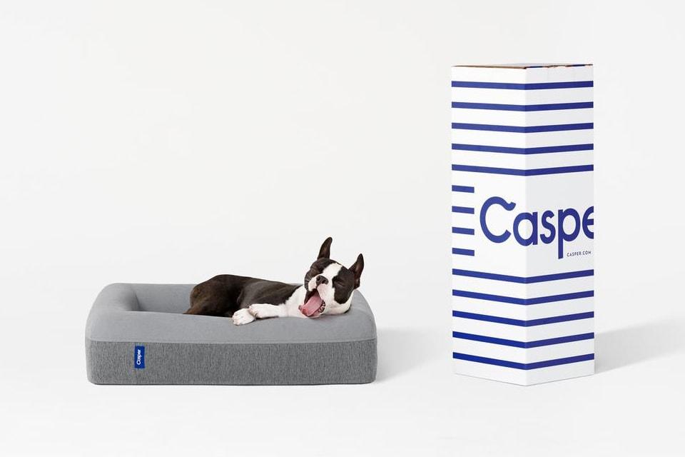 Casper Is Now Making Memory Foam Mattresses for Dogs