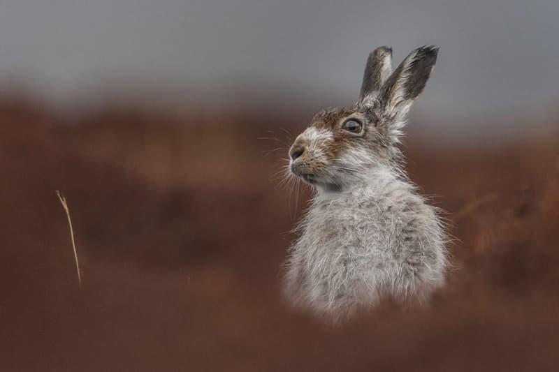2016 British Wildlife Photography Awards