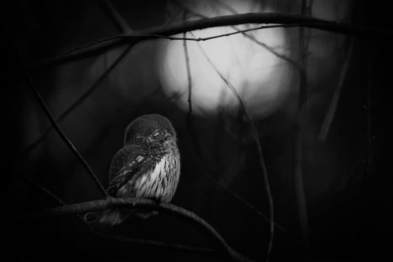 2016 Wildlife Photographer of the Year Awards