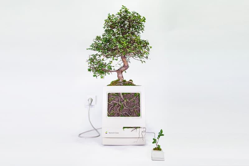 Monsieur Plant Apple Products Plants