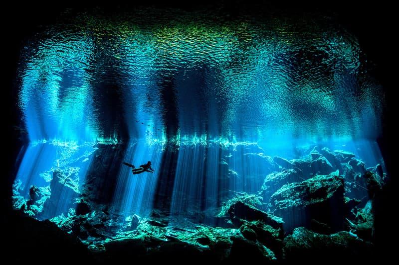 Underground Photographer of the Year Winners 2017 Octopus