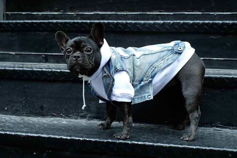 550f0168b784 Pawkier Streetwear collection line drop dog puppy pupper doggo yeezy off- white anti social social