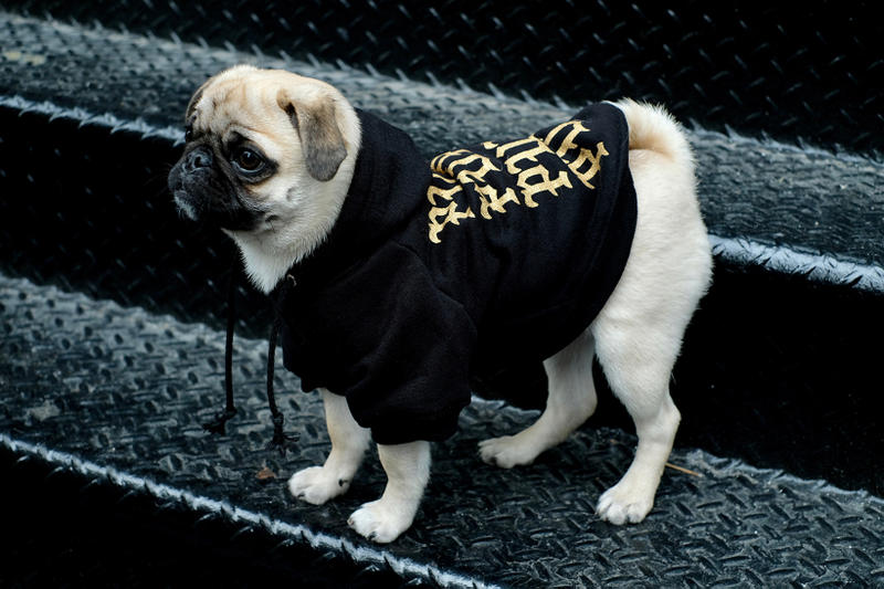 Pawkier Streetwear collection line drop dog puppy pupper doggo yeezy off-white anti social social club hoodie
