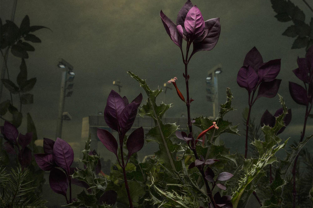 Magnum Photography Awards 2017 Winners LensCulture