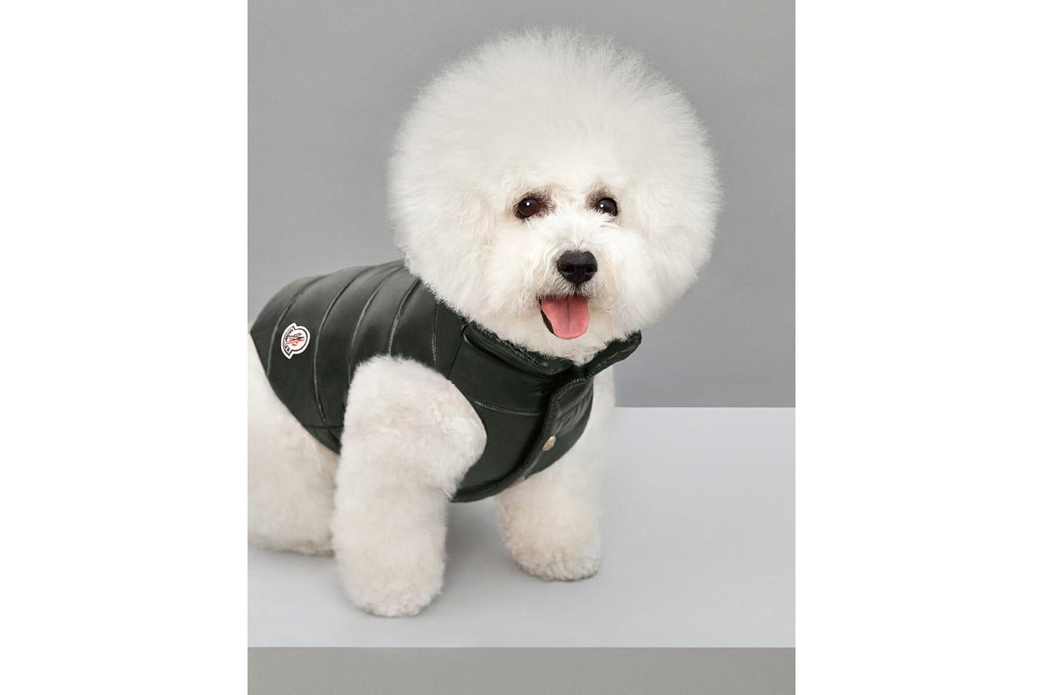 moncler drops mondog puffer jackets for dogs hypebeast rh hypebeast com