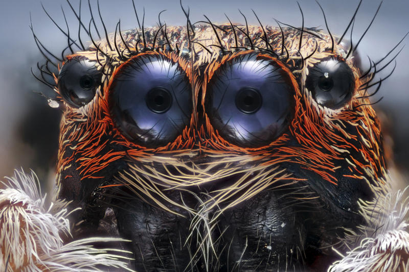 Nikon Small World Photomicrography Competition Photography Photographer Awards