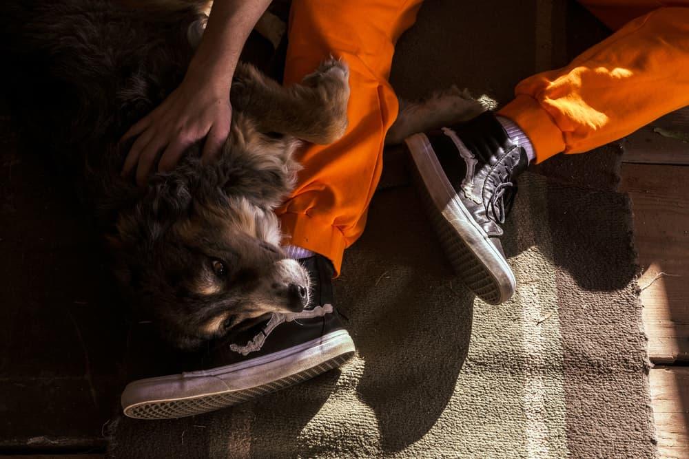 Blends & Vans Vault Bone Jazz Stripe Sk8-Hi Reissue Zip LX Sneakers Skateboard Mens Shoes 2018 January 6 Release Date Info