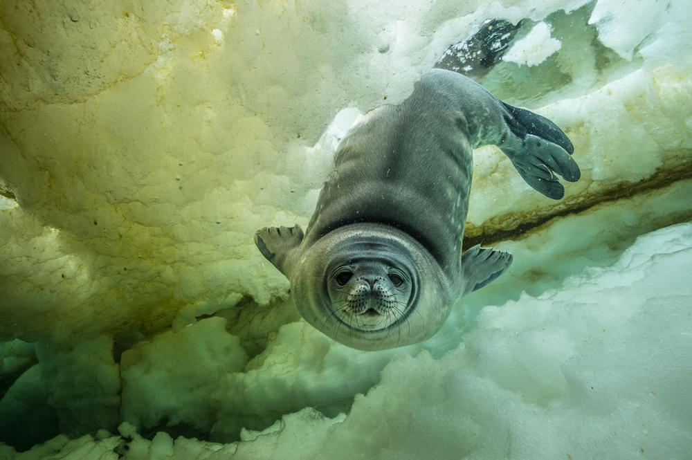 National Geographic Best Photos 2017 Pictures