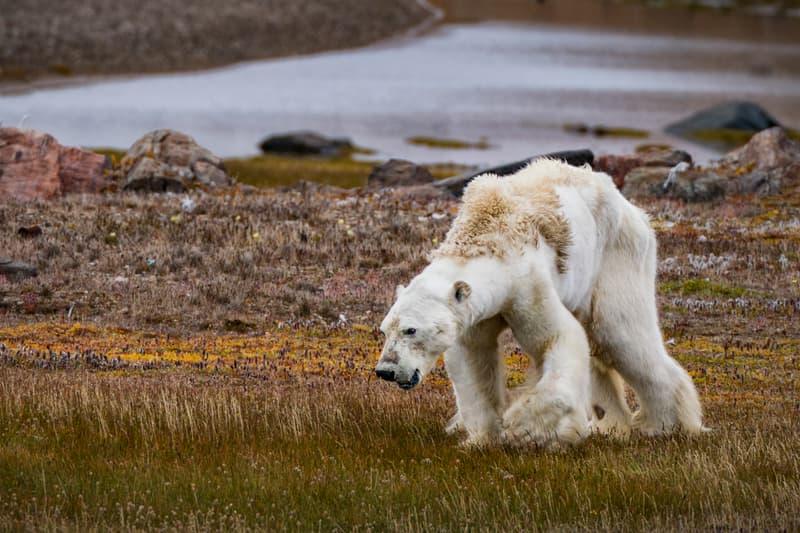 Time Magazine Top 10 Photos of 2017 Harvest Festival Tragedy Bangladesh Starvation Polar Bear Artic Conservation