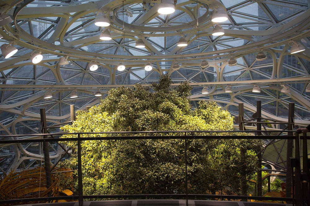 Amazon New Seattle Biospheres Look Inside Trees Southern California