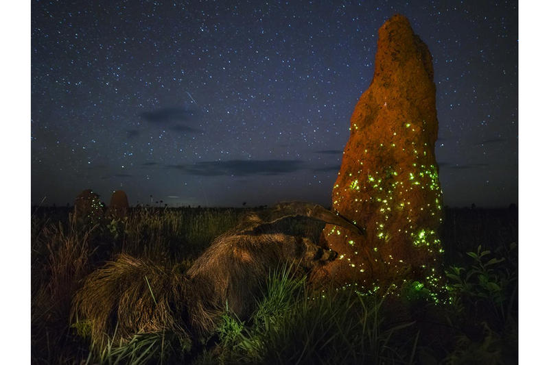 wildlife photographer of the year the natural history museum marcio cabral photography contest competition