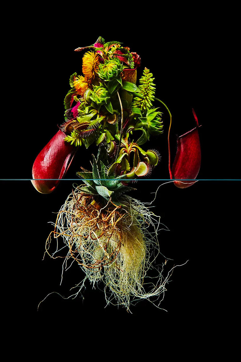 "Azuma Makoto ""Undersurface Flowers"" Photo Series composition perfect blossoms roots under over nature japanese art tokyo flower artist"