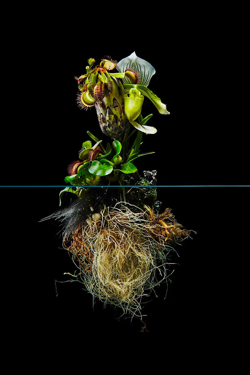 "Azuma Makoto ""Undersurface Flowers"" Photo Series composition perfect blossoms roots under over nature japanese art tokyo flower artist"