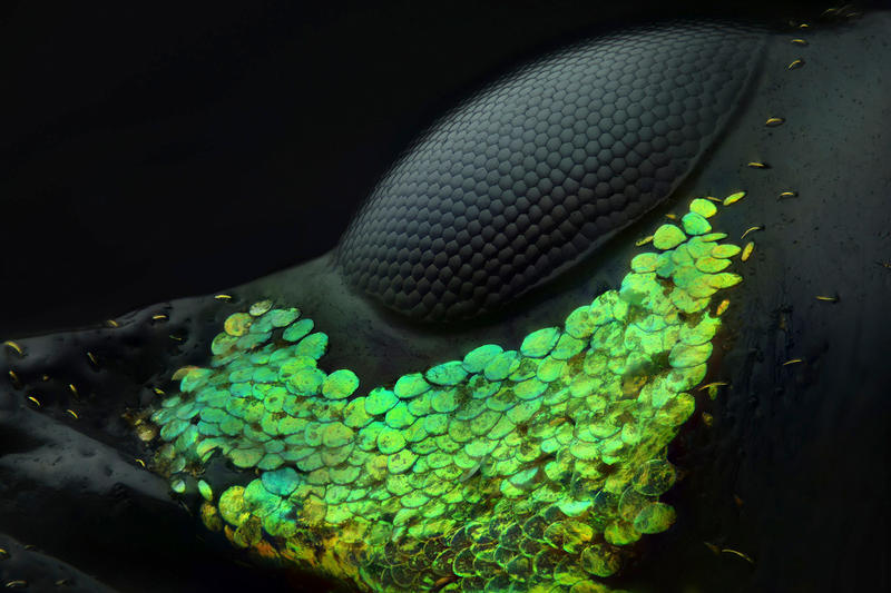 Nikon 2018 Small World Photomicrography competition Winners photography science microscope lens light imagery submit