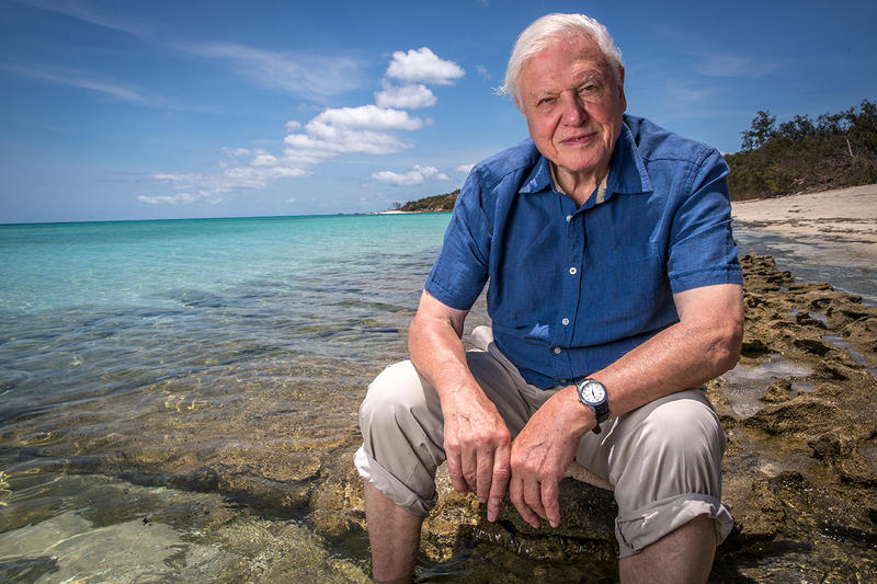 "David Attenborough ""Our Planet"" Netflix Details Stream TV Television Series Coming Soon Watch Stream"