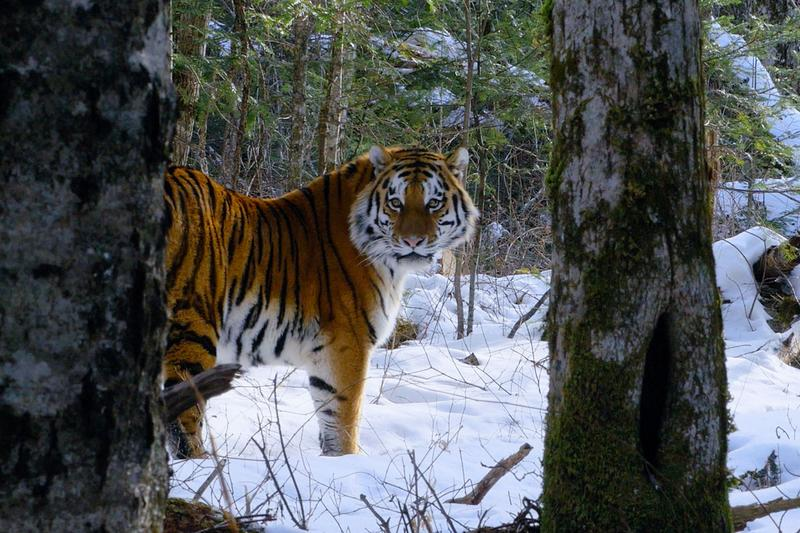 Netflix Warns Audience Graphic Content Our Planet animals documentary shows nature