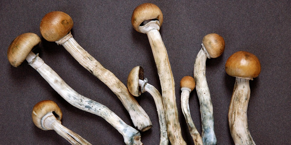 Denver Residents Are Close to Legalizing Shrooms