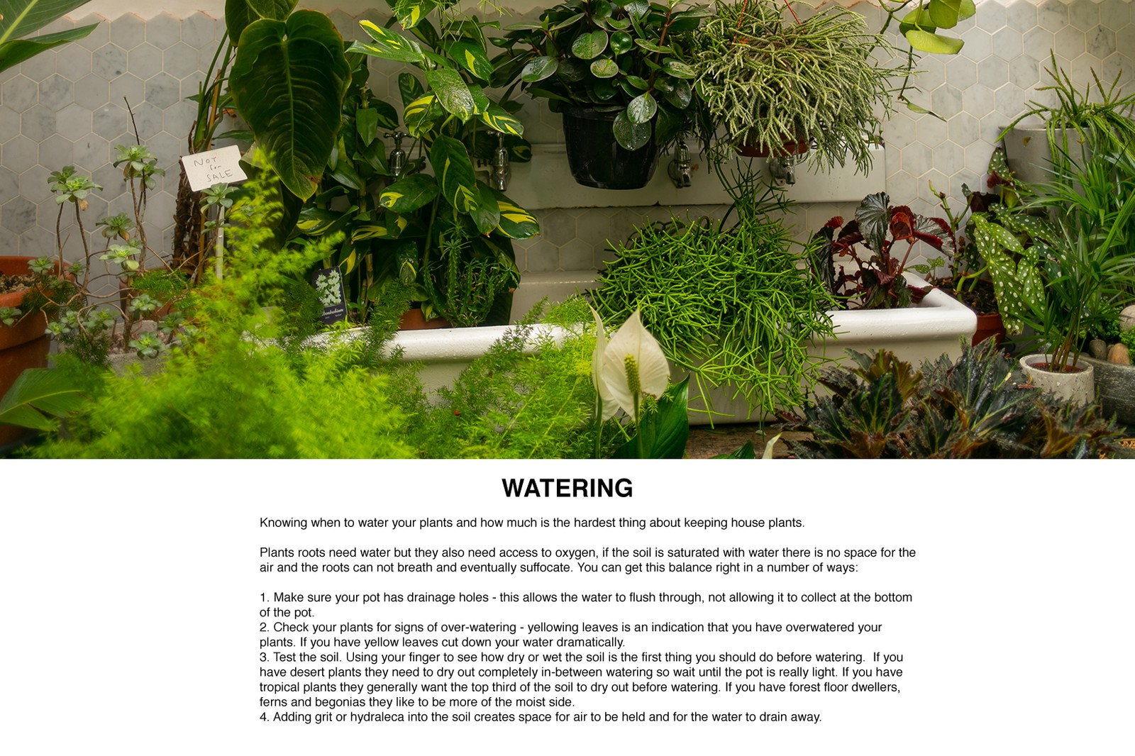 House Plant Care Guide Conservatory Archive London PRICK Cacti Succulents Caring for Plants Aftercare Plantfluencer PlantSOS Gynelle Leon Dandy Farmer Matthew Puntigam Fay Davies