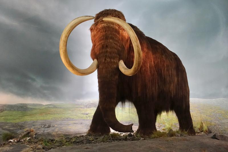 woolly mammoth mastodon ancient discoveries archaeology