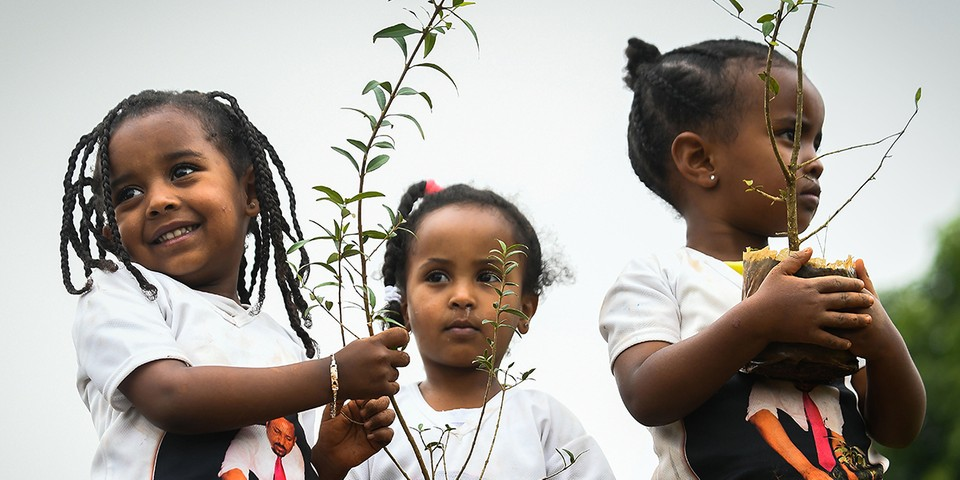 Ethiopia Plants a Record-Breaking 353 Million Trees in 12 Hours