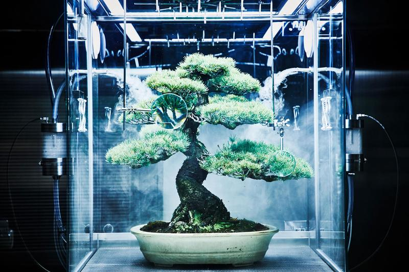 azuma makoto paludarium tachiko bonsai tree plant protection machine artworks flower arrangements