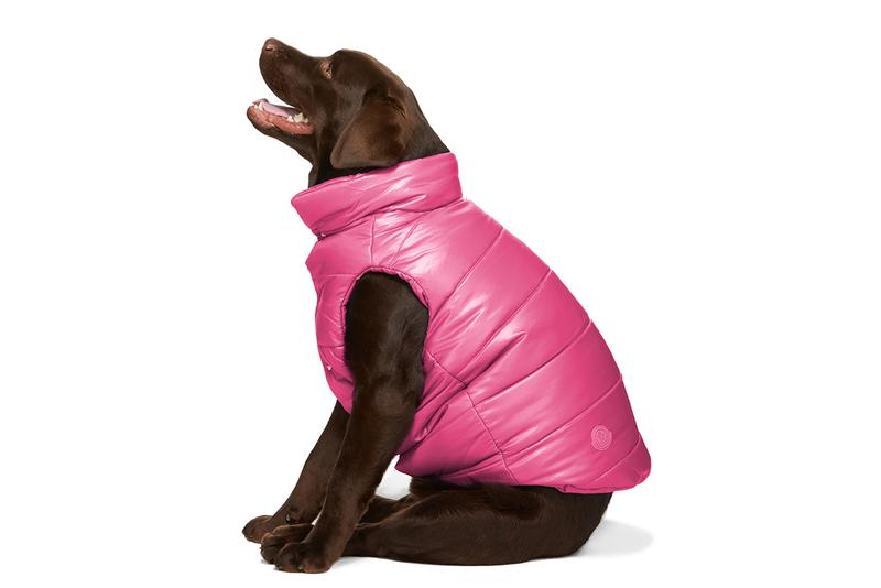 SSENSE Designer Dogwear Collection 032c Ashley Williams Burberry Heron Preston Marine Serre Moncler Genius Paul Smith Stutterheim Versace VIP pets ssenseinterns trend millennials
