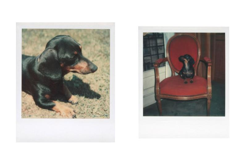 """Andy Warhol Foundation & Christie's Auction Emergency Relief Artists COVID-19 Photographs """"Andy Warhol: Better Days"""" Archie Tulips Self-Portrait Andy Warhol"""