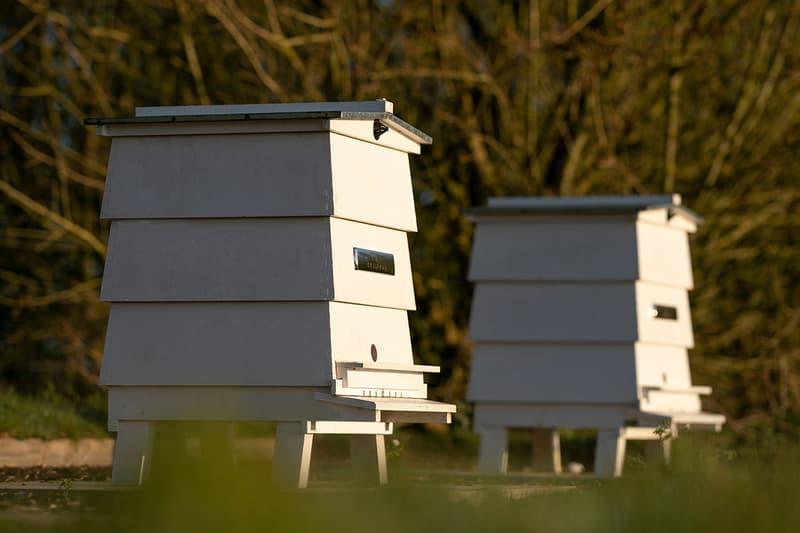Rolls-Royce Honey Production News Apiary Bees Beekeeping Goodwood West Sussex food sweets pollen luxury British