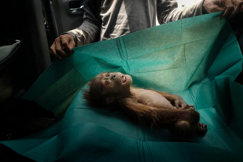 World Press Photo 2020 Winners World Press Photo Foundation Lannoo Publishers Contemporary Issues Environment General News Long-term projects Nature Portraits Sports Spot News