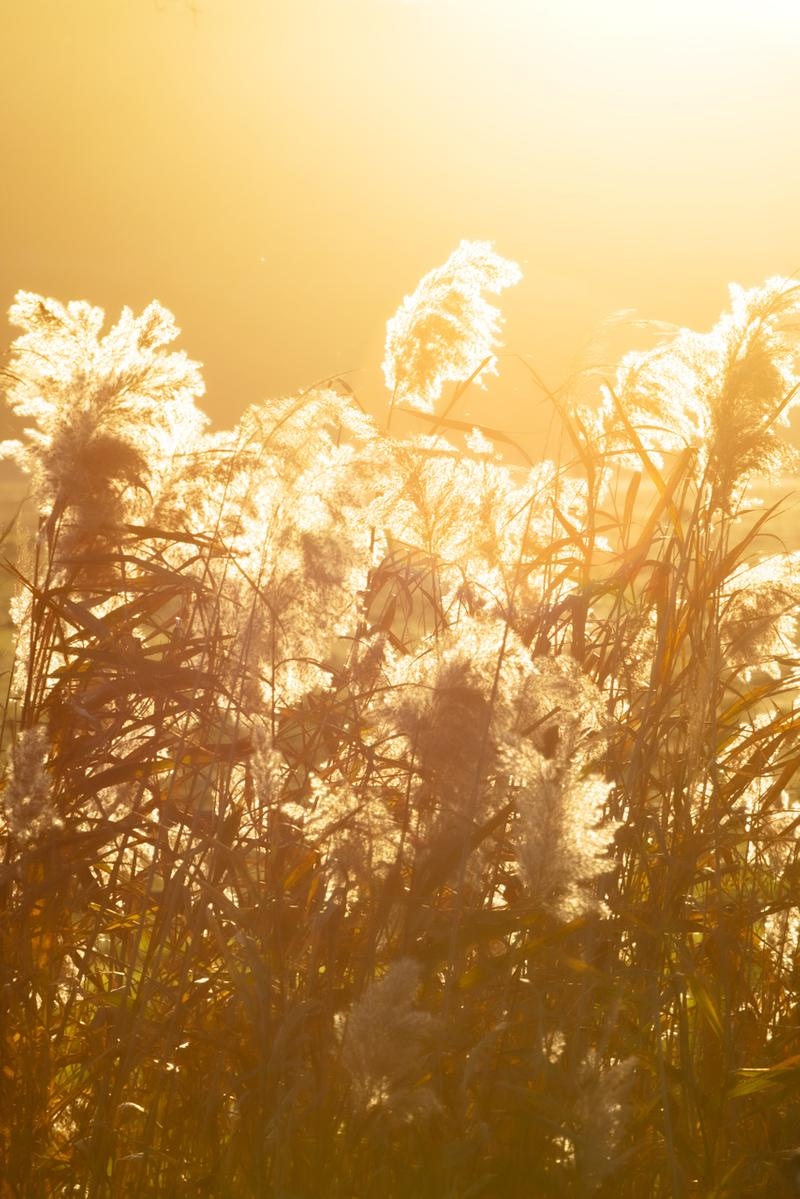alexander mcqueen creators series nature photography photos pictures sarah burton creative director