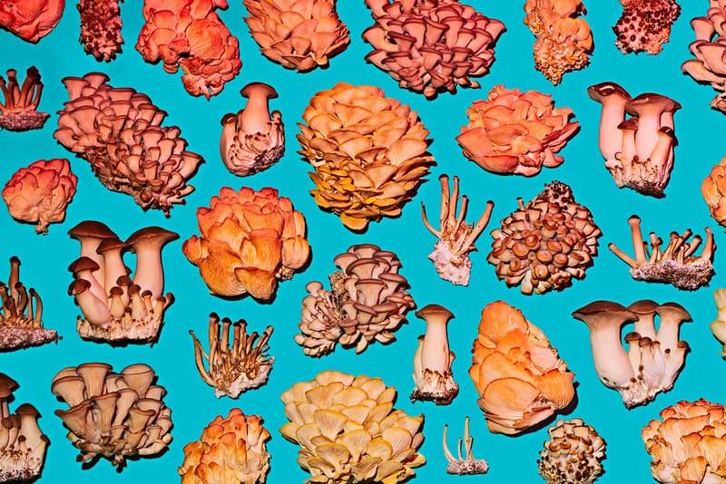 smallhold mushroom new york brooklyn andrew carter adam demartino phyllis ma grow at home lion's main blue yellow pink oyser block kit buy quarantine lockdown art story mfg online ceramics