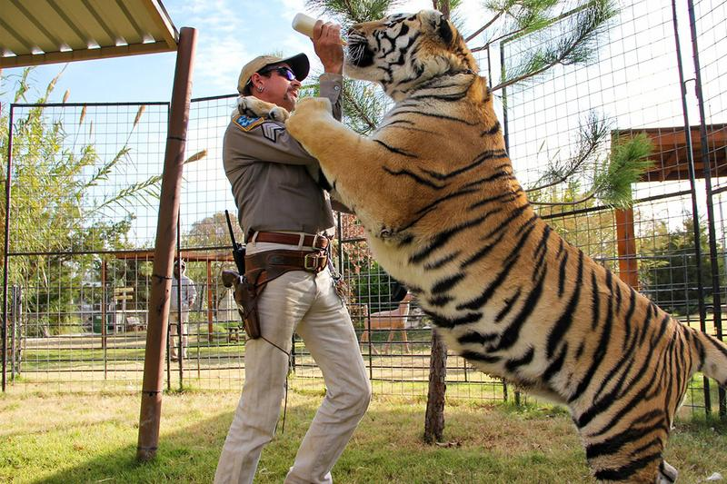 'Tiger King' Series to Return Without Joe Exotic siegfried roy Fischbacher horn big cat documentary Eric Goode Rebecca Chaiklin
