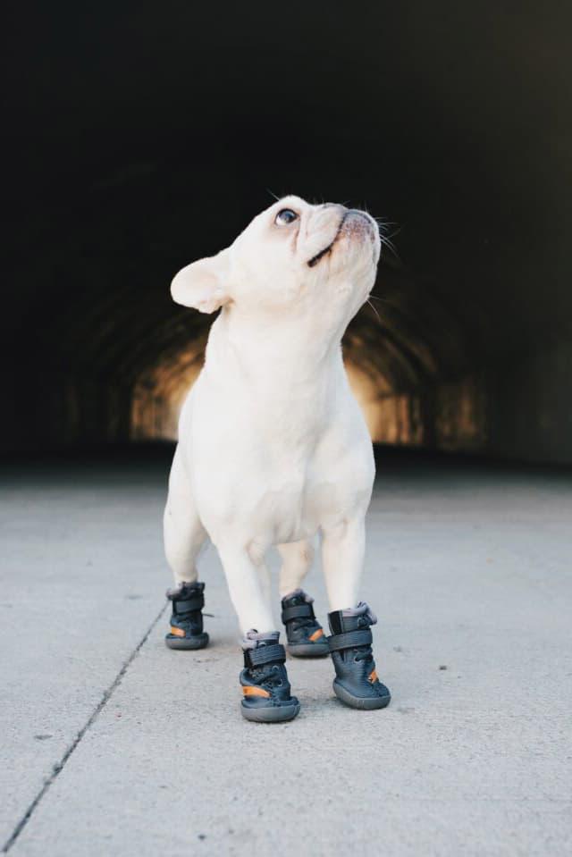 "Sapatilha para cães Fresh Pawz Beluga 544 Lançamento Laranja Cinza ""SPLY 554"" Sapato Velcro Sola de borracha Primeknit adidas YEEZY BOOST 350 V2 Beluga 2.0"