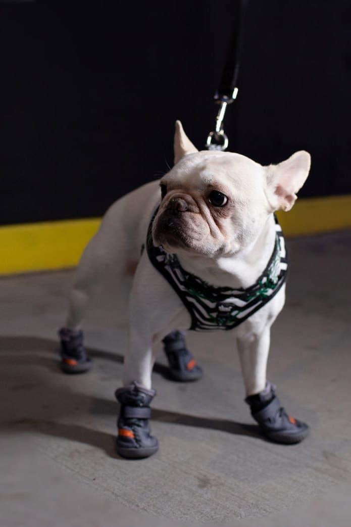 "Fresh Pawz Beluga 544 Dog Sneaker Launch Orange Gray ""SPLY 554"" Shoe Velcro Rubber Sole Primeknit adidas YEEZY BOOST 350 V2 Beluga 2.0"