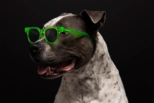 HUF and LA Brand AKILA Introduce New Sunglasses Capsule
